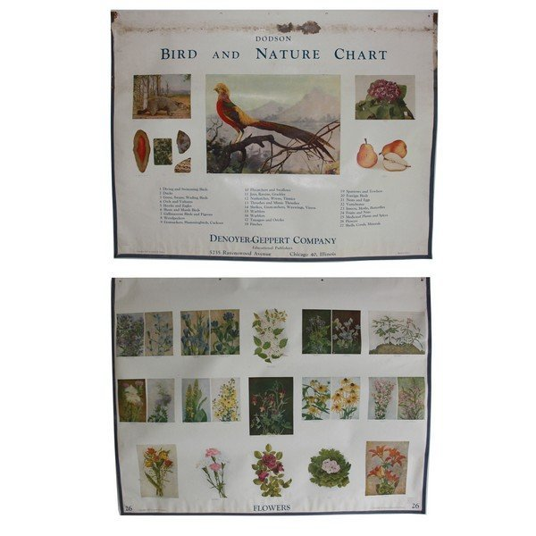 Lot 1 of Beautiful Bird and Nature Charts by Dodson 6