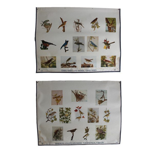 Lot 2 of Beautiful Bird and Nature Charts by Dodson 6