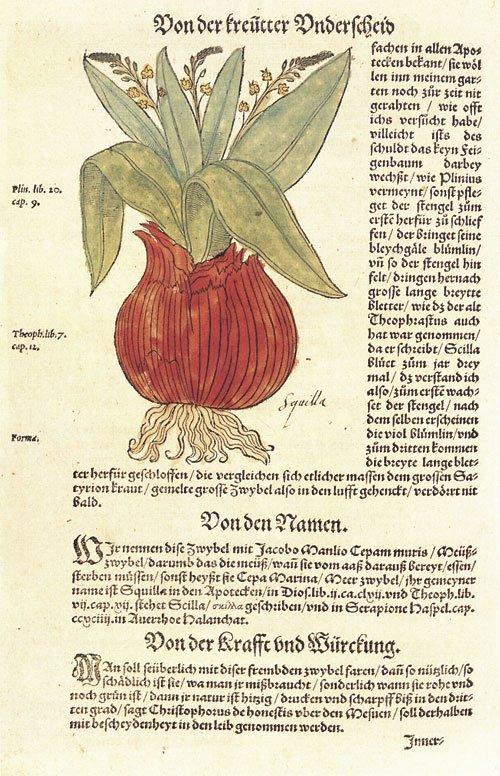 708: Bock, Hieronymus: Kreutterbuch. Straßburg 1565