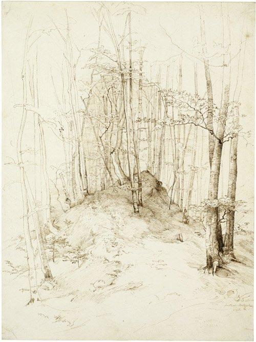 6598: Dreber, Heinrich: Waldstück im Isartal bei Menter