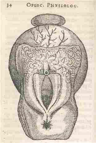 Bontius, J. u. a.: Sammelband von 6 med. Schriften