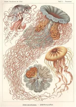 Haeckel, Ernst: Kunst-Formen der Natur