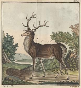 Bechstein, J. M.: Die Jagdwissenschaft