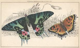 Brown, Thomas: Popular natural history