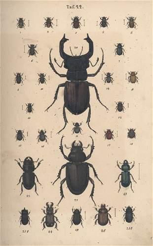 Calwer, C. G.: Käferbuch