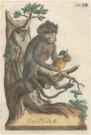 Heppe, Johann Christoph: Die drey Reiche der Natur