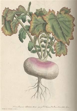 Martyn, Thomas: Flora rustica