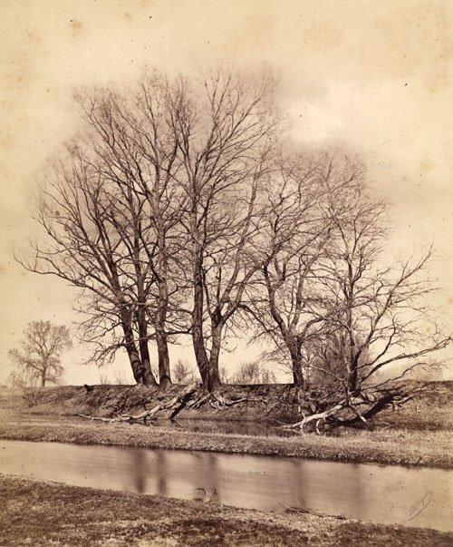 4108: Angerer, Ludwig: Tree landscape