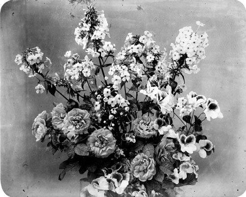 4113: Braun, Adolphe: Roses and pansies