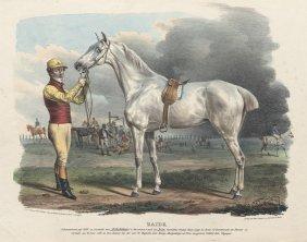 Pferderennen: Rubens / Zaide