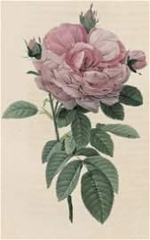1066: Redout�, Pierre Joseph : Les Roses, 1824-1826