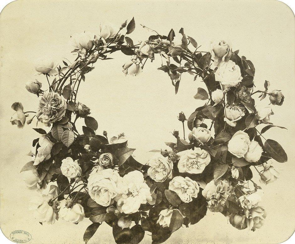 4022: Braun, Adolphe: Flower study