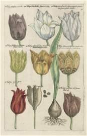 Tulpen, Narzissen, Iris,: Krokusse, Zyklamen; Birnen et