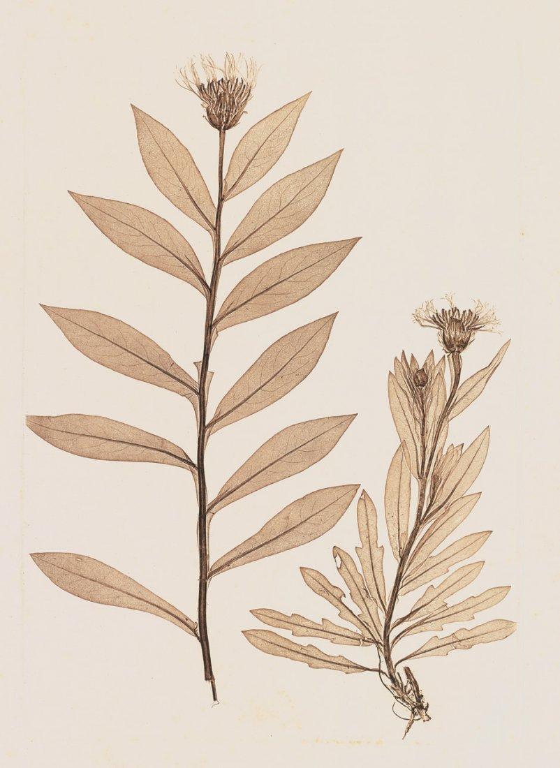 Ettingshausen, Constantin v. and A. Pokomy: Plant studi