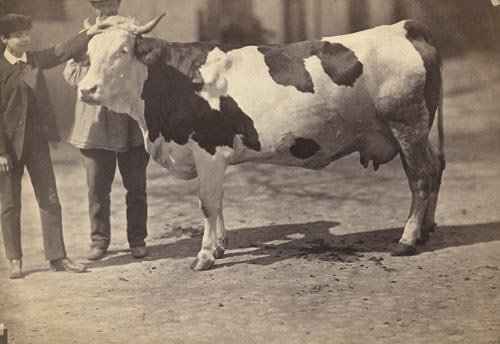 4020: Braun, Adolphe: Man and boy with cow