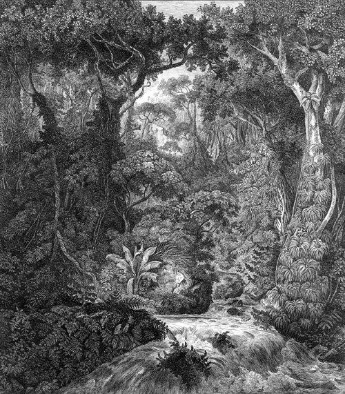 5751: Königsbrunn, Hermann von : Urwald auf Ceylon