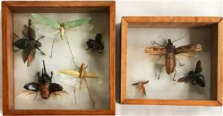Collection of Iridescent Insect Specimens