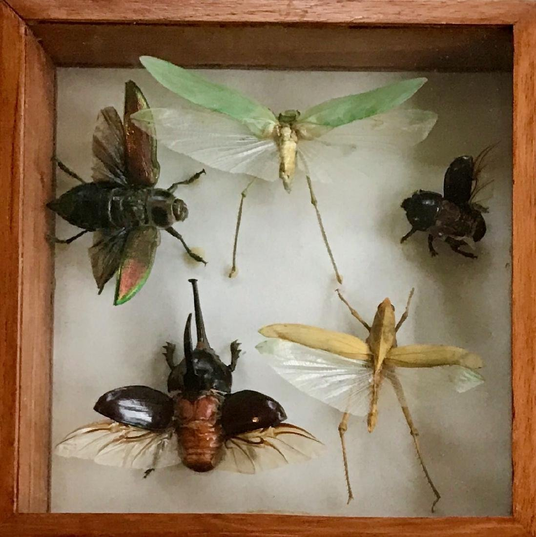 Collection of Iridescent Insect Specimens - 2