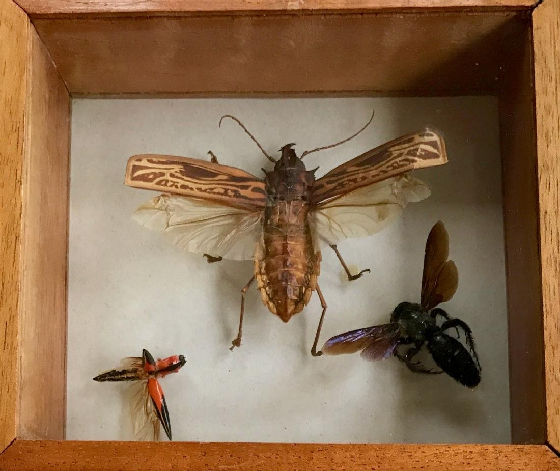 Collection of Iridescent Insect Specimens - 3