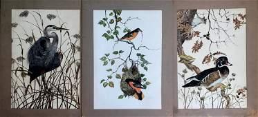 Robin Hill (Australian,1932) WILDLIFE BIRDS
