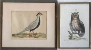 18th C. Hand-colored Bird Engravings PHEASANT & OWL