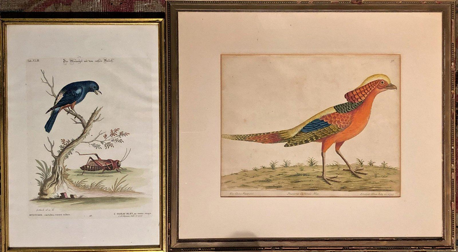 wading and shore birds buffon bird rare original antique print ornithology engraving 1775 ANTIQUE BIRD ENGRAVING