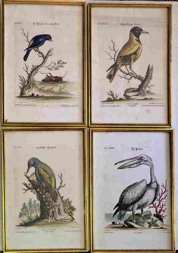 18th Century Hand-Colored Bird Engravings (4)