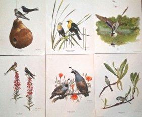6 Wildlife Bird Prints, Ray Harm
