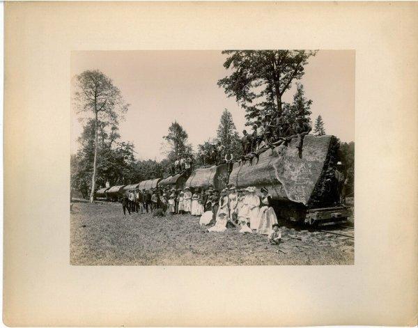 3534: 1890s HUMBOLDT CALIFORNIA REDWOODS CABINET PHOTO