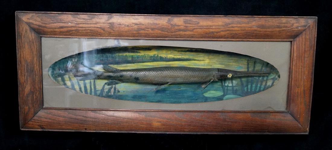 ALLIGATOR FISH DIORAMA OAK FRAME