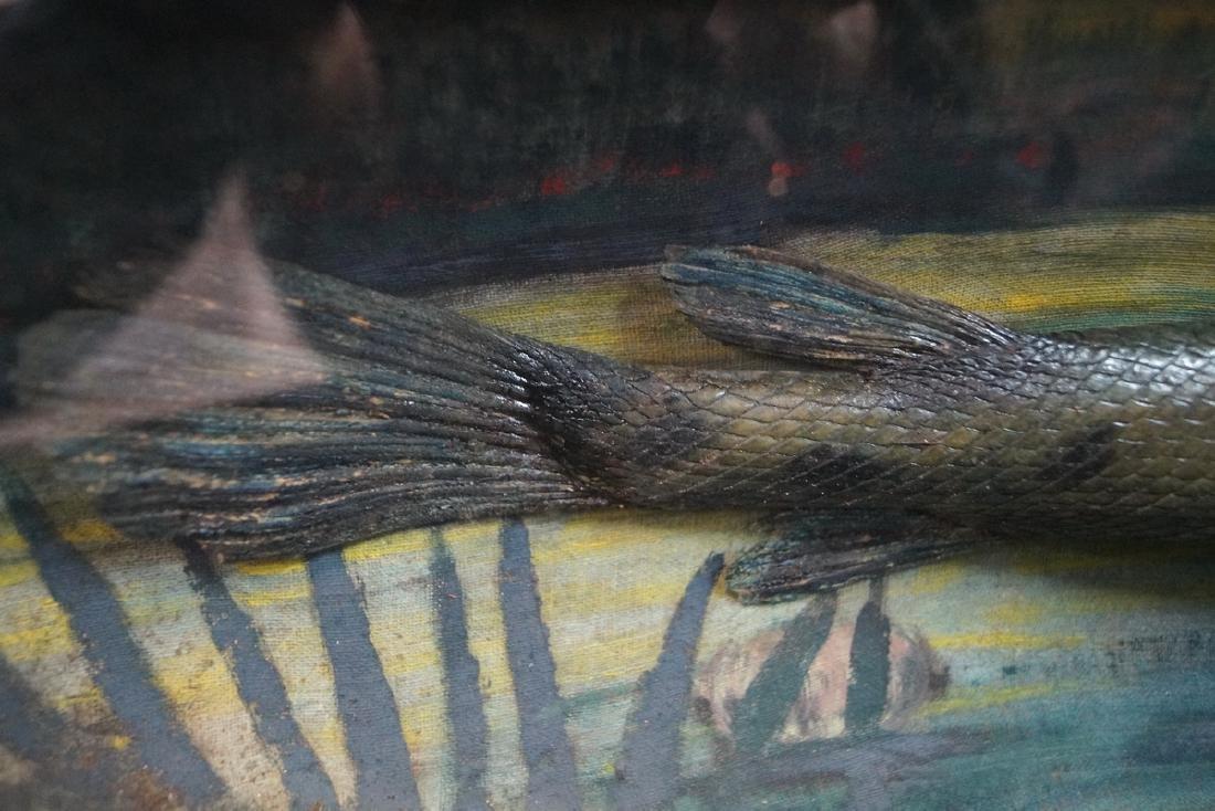 ALLIGATOR FISH DIORAMA OAK FRAME - 3