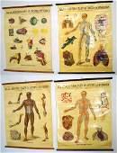 W & AK JOHNSTON ANATOMY & PHYSIOLOGY CHARTS GROUP OF 4