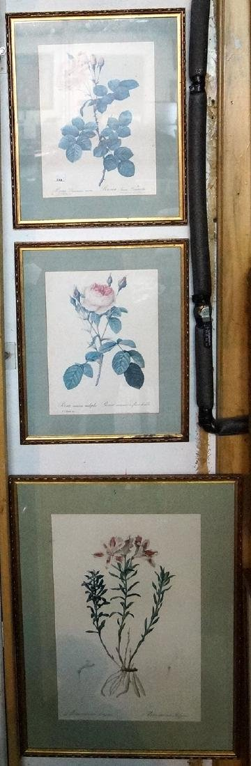 3 PRINTS OF FLOWERS, LARGEST