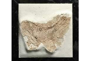 Ancient Roman or Etruscan Fresco Fragment with Bird .