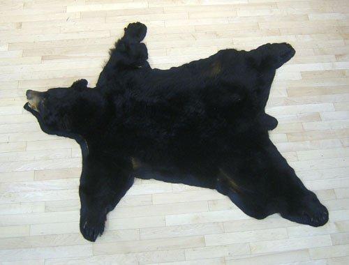 5A: Black bear trophy rug.