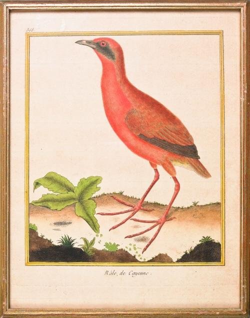513: Two early colored bird engravings, 11'' x 8 1/2''.
