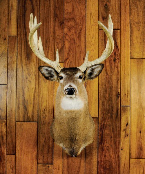 16: Exceptionally heavy horned Pennsylvania whitetail