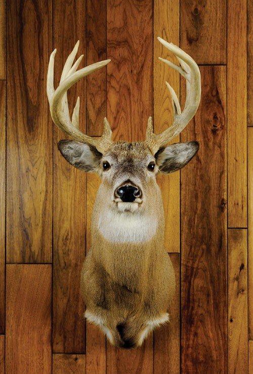 18: Fourteen point Pennsylvania whitetail.