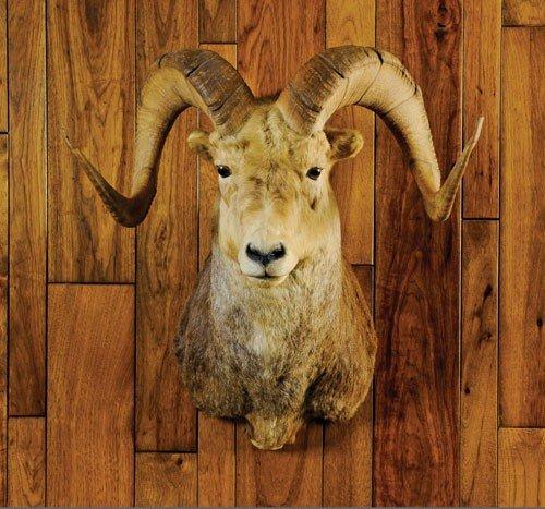 20: Stone sheep.