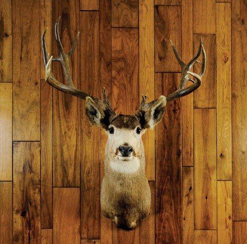 22: Mule deer mount taken on the Jicarilla Apache res