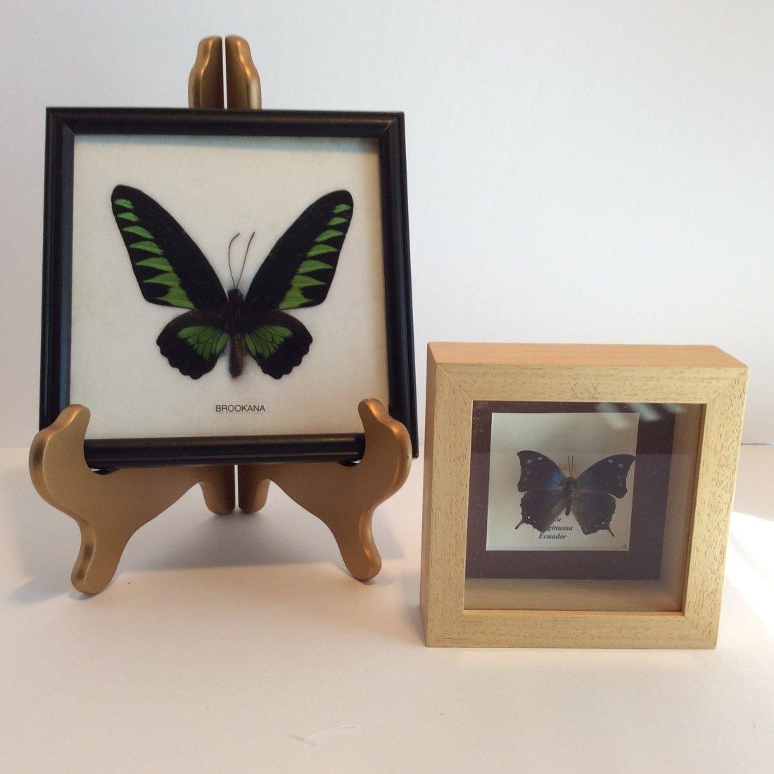 2 Framed Butterfly's