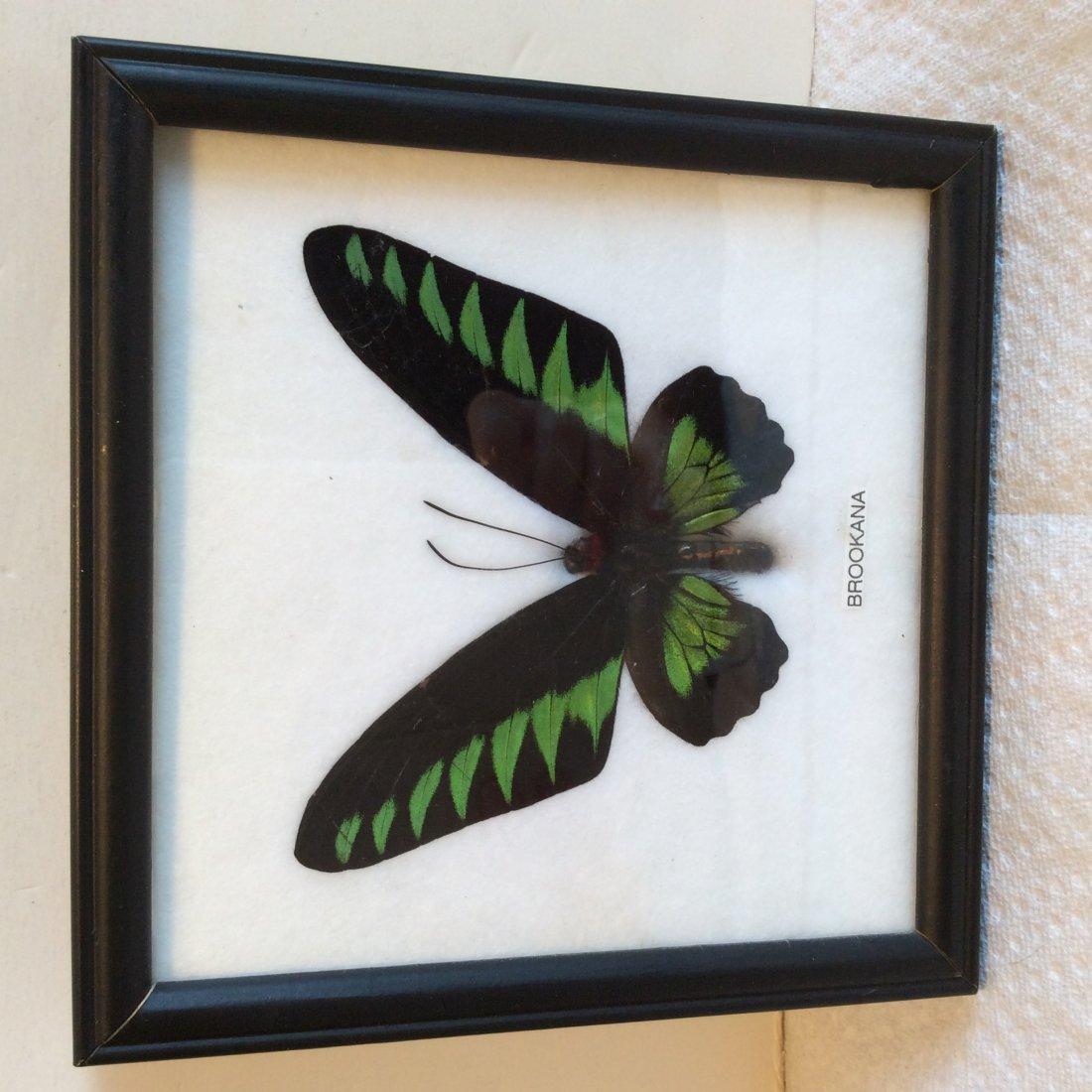 2 Framed Butterfly's - 2