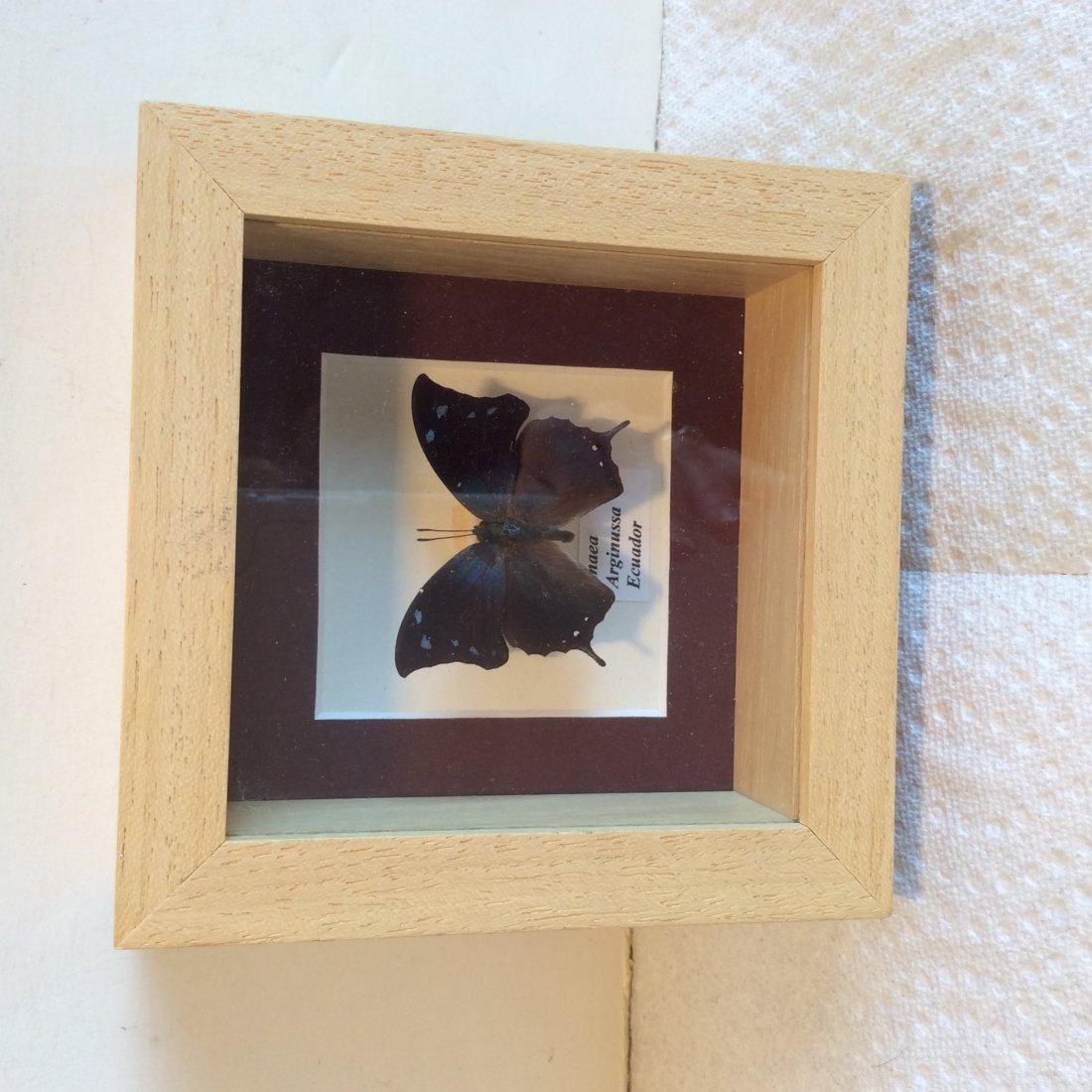 2 Framed Butterfly's - 3