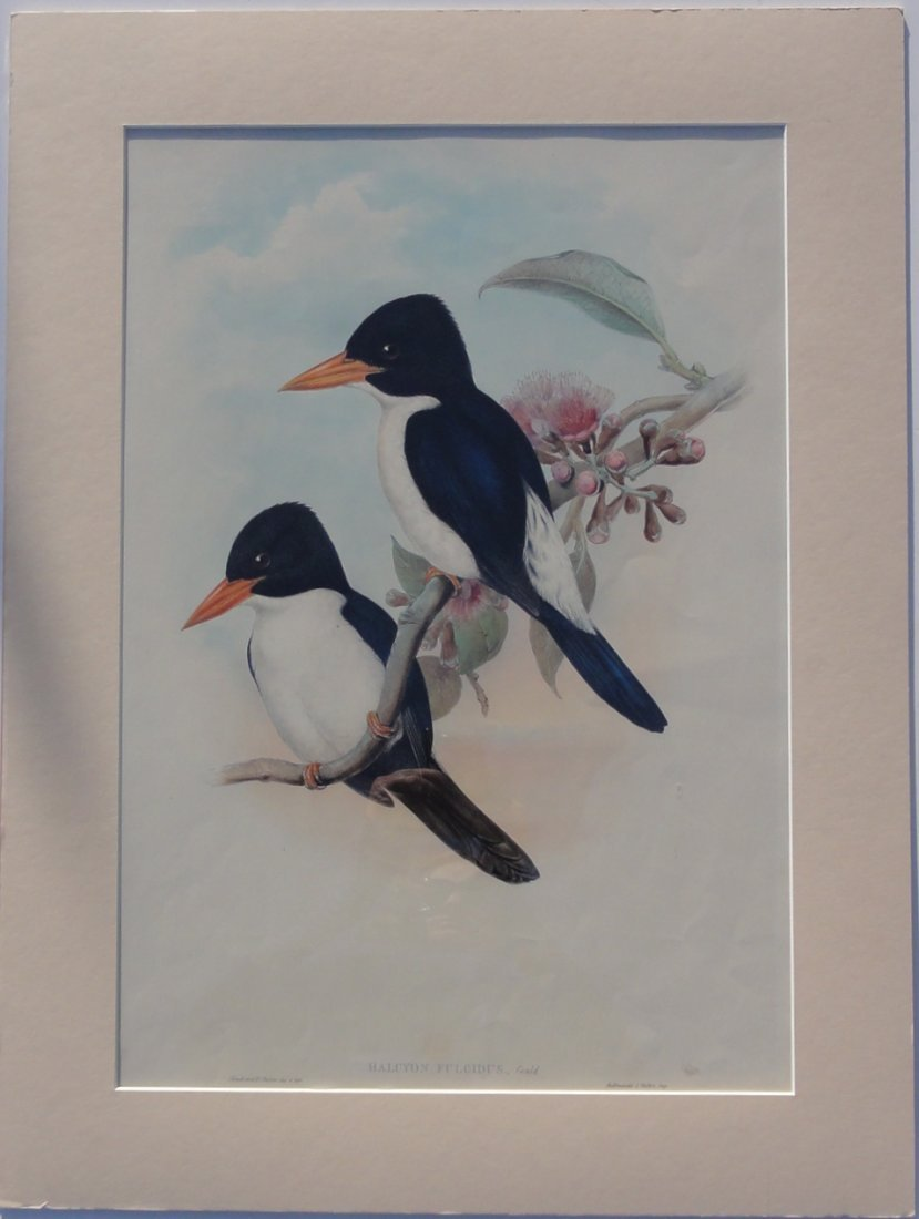 Kingfishers by John Gould, 1840