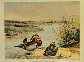 Mandarin Duck & Drake