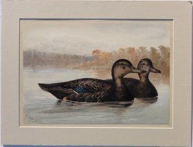 The Black Ducks By Alexander Pope, 1878