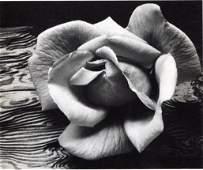 Adams, Ansel - Rose & Driftwood - Gravure