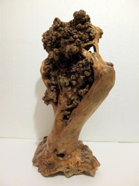 Natural Tree Root Sculpture With Burls