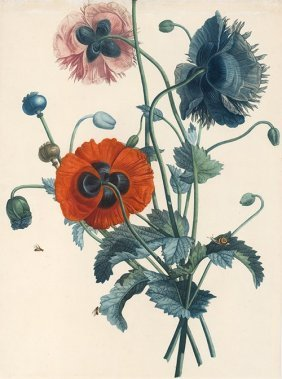 Poppies By Jean-louis Prevost