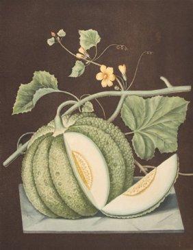 Green Melon On Black Background By George Brookshaw